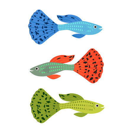 poecilia: Beautiful guppy fish vector illustration