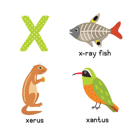 Cute Animal Zoo Alphabet. Letter X for x-ray fish, xantus, xerus. Fun teaching aids for Kids Illustration