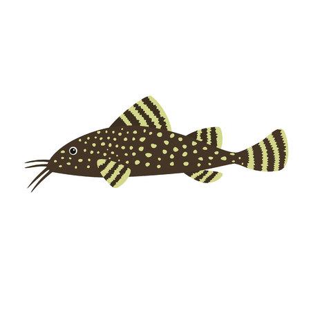 fisch: Catfish on white background