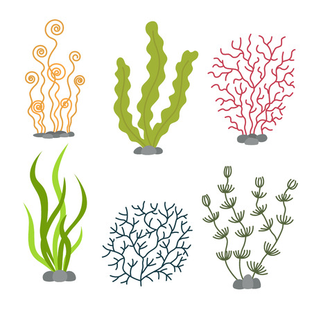 Sea plants and aquatic marine algae. Seaweed set vector illustration Illustration
