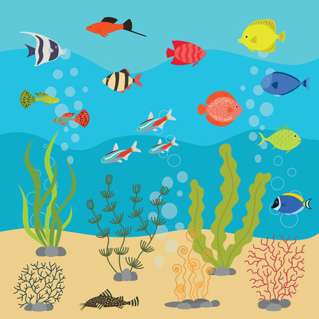 guppies: Tropical exotic fishes in aquarium or ocean underwater. Vector illustration of fish tank with colorful sea fishes and algae.