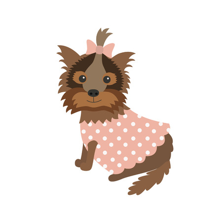 shaggy: dog Yorkshire Terrier in clothes sitting