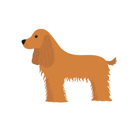 Dog Cocker Spaniel illustration. Illustration