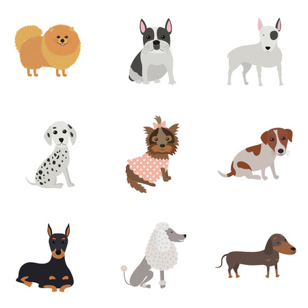 Set of dogs of different breeds