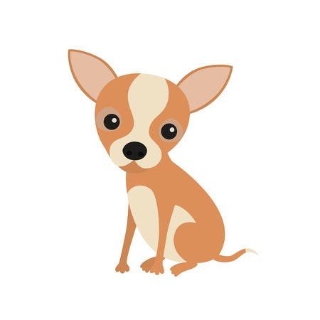 Nette Kleine Chihuahua Hund Ein Halsband Sitzen Auf Weißen ...