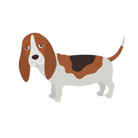 DOG Basset Hound. Flat vector illustration isolated on white background