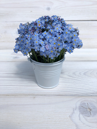 flowers forget-me in a bucket Stockfoto