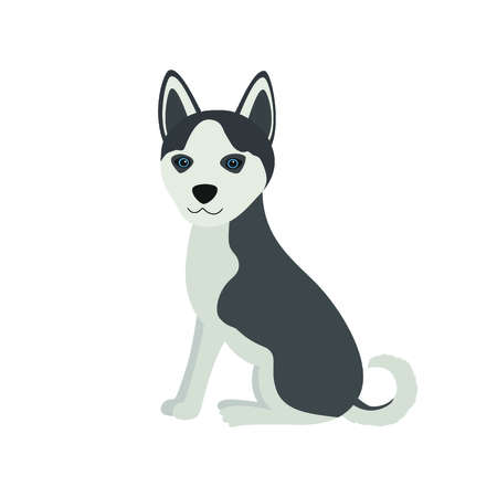Cute Siberian Husky Purebred sit front view dog, vector illustration on white isolated background