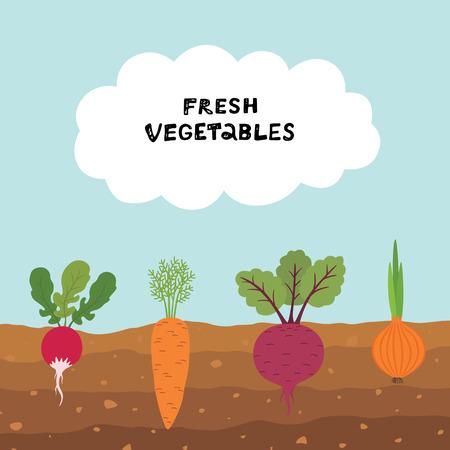 Frischer Bio-Gemüsegarten auf Hintergrund des blauen Himmels. Stellen Sie Gemüsepflanzen ein, die unterirdische Karotten, Zwiebeln, Rettich, Rüben anbauen. Vektorgrafik