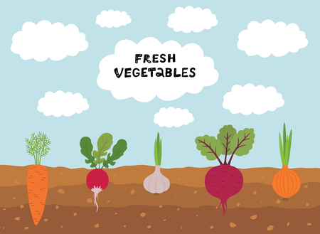 Fresh organic vegetable garden on blue sky background. Set vegetables plant growing underground carrot, onion, garlic, radish, beet. Ilustracja