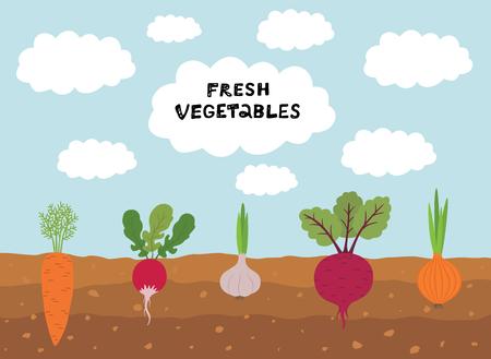 Frischer Bio-Gemüsegarten auf Hintergrund des blauen Himmels. Stellen Sie Gemüsepflanzen ein, die unterirdische Karotten, Zwiebeln, Knoblauch, Rettich, Rüben anbauen.
