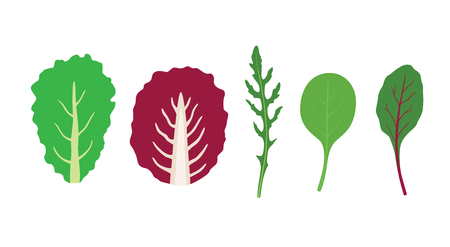 Set of salad greens vector. Leafy vegetables. Mix of salad leaves. Arugula, chard, spinach Çizim