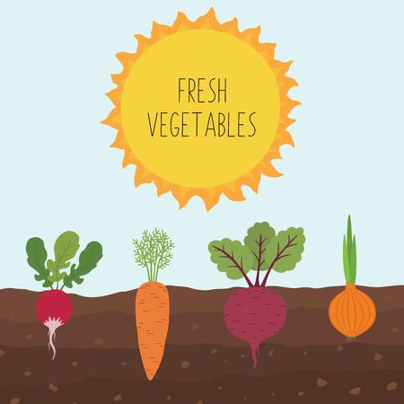 Frischer Bio-Gemüsegarten auf Hintergrund des blauen Himmels. Stellen Sie Gemüsepflanzen ein, die unterirdische Karotten, Zwiebeln, Rettich, Rüben anbauen.