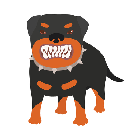 Illustration of a really vicious and evil looking dog. The Rottweiler bares his teeth. Vector on white isolated background Ilustracja