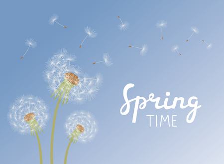 Lettering Spring Time. Dandelions with flying seeds on blue sky. Vector illustration.