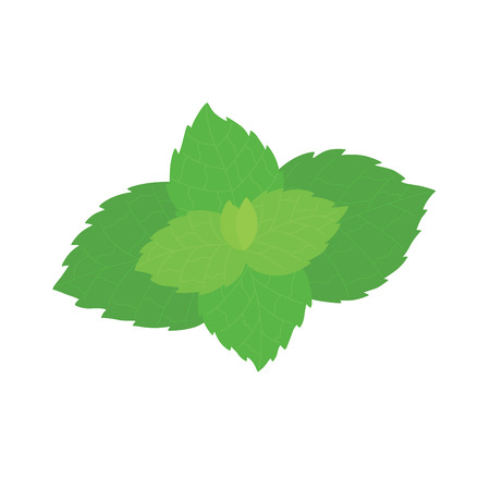 Vector fresh mint leaves on a white background. Vector illustration