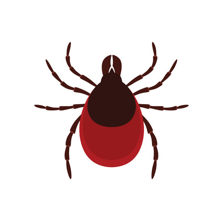 Mite parasites. Tick parasite. Acarus. Vector illustration on white isolated background Ilustracja