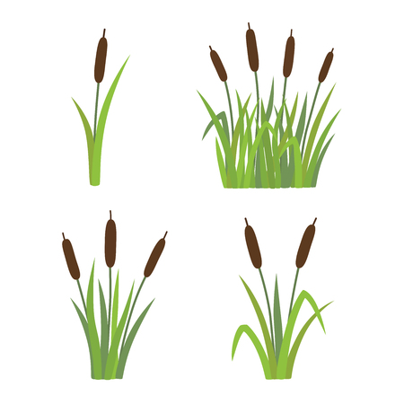 A set of reeds in grass isolated on white background vector illustration