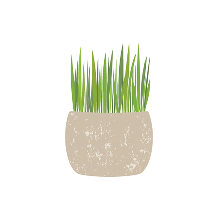Fresh green grass in a rectangular and round pot. Element of home decor. The symbol of growth and ecology. Vector illustration, isolated.