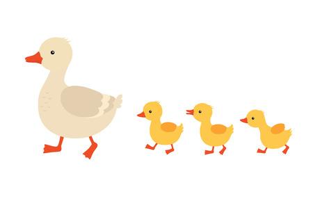 Madre pato y patitos. Lindos patos bebé caminando en fila. Ilustración vectorial de dibujos animados. Pato madre animal y patito de la familia. Ilustración de vector sobre fondo blanco aislado