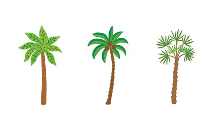 Palm trees isolated on white background. Beautiful vector palm tree set