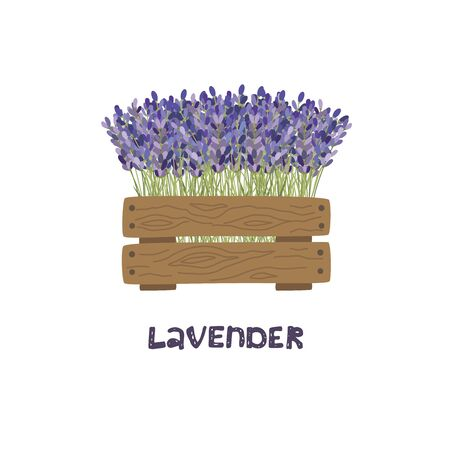 Bouquet of lavender in a wooden planter. Vector illustration.