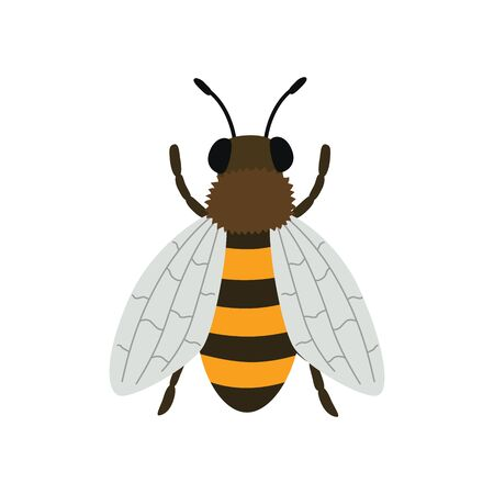 Bee top view. Vector illustration isolated on white background.