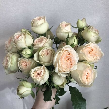 Cream orange and peach peony roses in a bunch