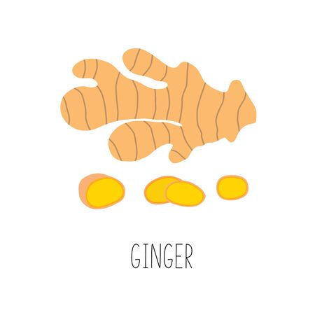 Fresh ginger and slices. Vector illustration isolated. Ilustracja