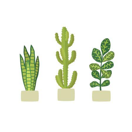 Potted plants in pots. Cactus euphorbia, Codiaeum variegatum, Sansevieria.