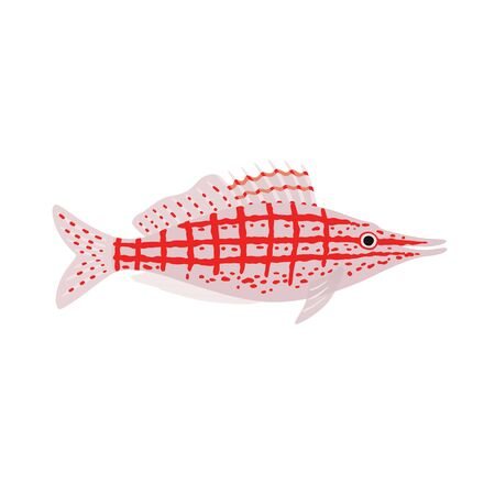 Longnose hawkfish. Oxycirrhites typus. Marine fish. Vector illustration Çizim