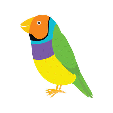 Amadina finch gouldian finch, erythrura gouldiae bird. Yellow beautiful exotic bird.