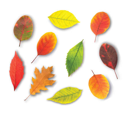 collection beautiful colorful autumn leaves Ilustracja