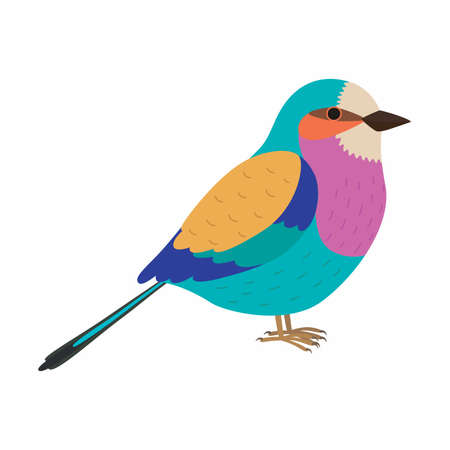 Lilac breasted roller. Colorful beautiful bird. Vector illustration