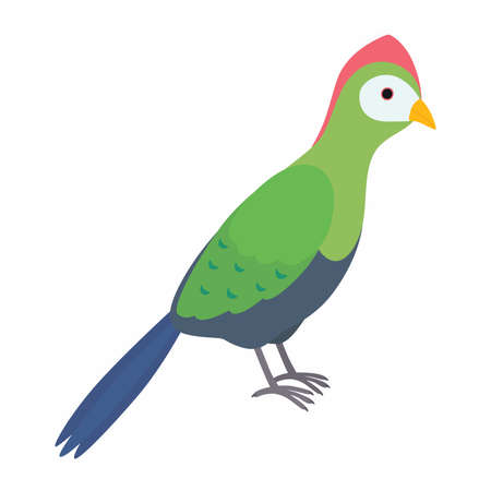 Green turaco bird. Vector illustration isolated on white background.