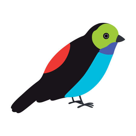 Paradise tanager bird illustration. Vector illustration isolated. Ilustracja