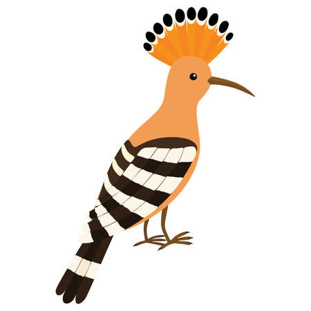 Hoopoe Bird. Vector illustration isolated on white background.