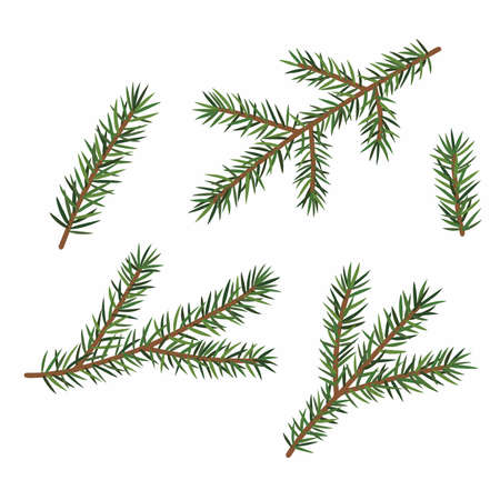 Green branches of a Christmas tree, set, isolated on white background.