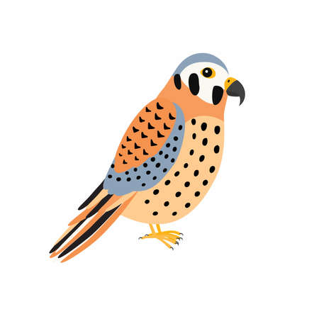 Kestrel bird. Vector illustration Isolated on white background.