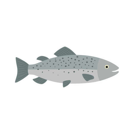 Salmon fish. Vector illustration isolated on white background.