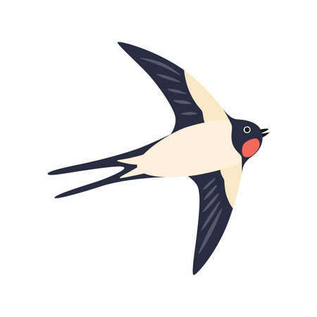 Swallow in flight. Vector illustration Isolated on white background.
