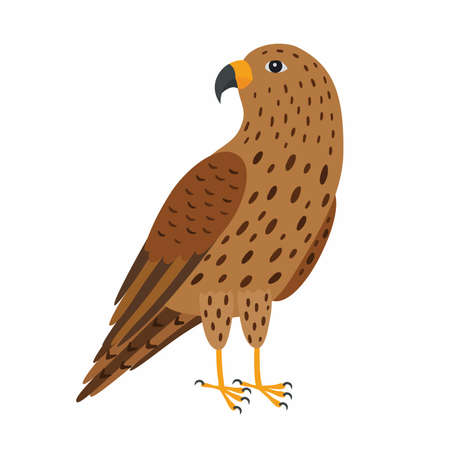 Falcon bird. Vector illustration Isolated on white background.