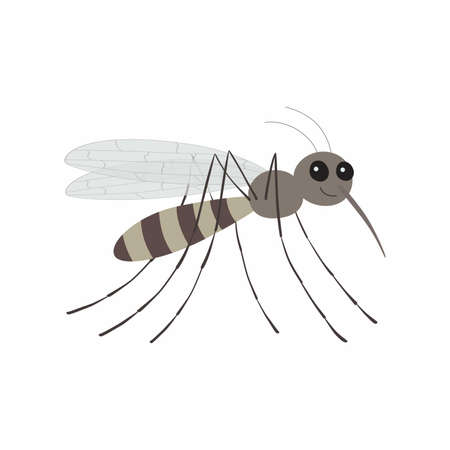 Cartoon mosquito character. Vector illustration Isolated. EPS10