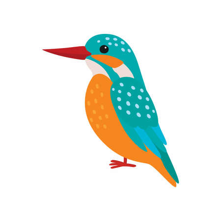 Kingfisher vector. Predatory birds wildlife concept in flat style design.