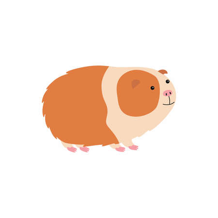 Vector illustration of cute cartoon guinea pig.