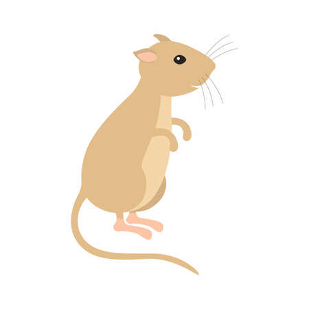 Gerbil sitting on his feet. Vector illustration isolated.