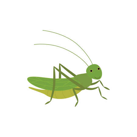 Cartoon funny cricket. Vector illustration isolated on white background.