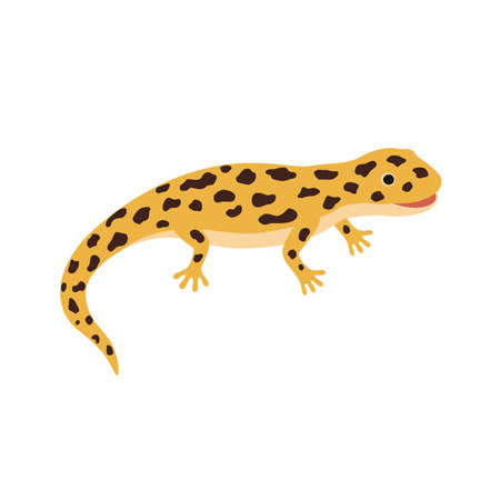 Yellow lizard, spotted Salamander isolated on white