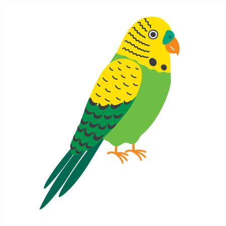 Budgerigar green parrot. Budgie common parakeet vector illustration.