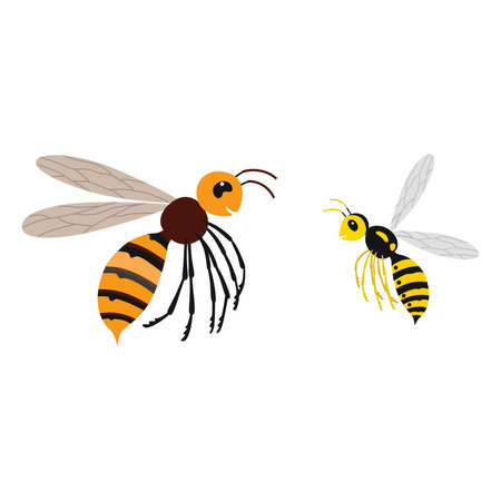 Hornet and wasp, differences. Vector illustration isolate.